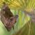 小さくする · フルーツ · バット · 絞首刑 · ヤシの葉 · 手のひら - ストックフォト © davemontreuil