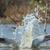 salpico · água · pássaro · África · animal - foto stock © davemontreuil