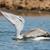 морем · океана · синий · белый · животного - Сток-фото © davemontreuil