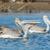 três · peixe · natação · aquário · Lisboa · Espanha - foto stock © davemontreuil