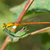 penge · fű · tavasz · zöld · szín · légy - stock fotó © davemontreuil