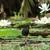 água · lírios · botânico · jardins - foto stock © davemontreuil