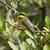 kicsi · méh · madár · Afrika · természetes - stock fotó © davemontreuil