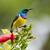 felső · virágzó · bokor · virág · madár · Afrika - stock fotó © davemontreuil