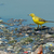 britânico · amarelo · em · pé · flutuante · lixo · esgoto - foto stock © davemontreuil