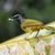 palmblad · nest · materiaal · natuur · blad · palm - stockfoto © davemontreuil