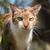肖像 · 家 · 猫 · 光 · 白 - ストックフォト © davemontreuil