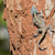 An Agama Lizard with shedding skin on the trunk of a tree stock photo © davemontreuil