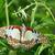 krab · spin · witte · buit · natuurlijke · groene - stockfoto © davemontreuil