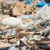 скота · белый · Постоянный · природы · области · птица - Сток-фото © davemontreuil