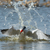 voador · peixe · água · pássaro · África · salpico - foto stock © davemontreuil
