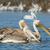 белый · озеро · Африка · Кения · воды - Сток-фото © davemontreuil