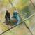 masculino · pássaro · limpeza · animal · belo - foto stock © davemontreuil