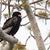 Águia · árvore · natureza · pássaro · África · parque - foto stock © davemontreuil