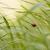 joaninha · sessão · fresco · grama · verde · raso - foto stock © deandrobot