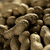 dried peanut put by a row stock photo © deandrobot
