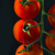 maduro · fresco · tomates · cereja · isolado · preto · fundo - foto stock © deandrobot