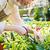 kertészkedés · nő · növények · tavasz · terasz · természet - stock fotó © deandrobot