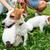 lány · kutyák · fehér · nő · szépség · csoport - stock fotó © deandrobot
