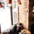barbudo · homem · usando · laptop · bonito · sessão · sofá - foto stock © deandrobot