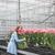 mujer · mirando · flores · jóvenes · mujer · bonita · rojo - foto stock © deandrobot