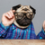 man with pug dog head in glasses showing thumbs up stock photo © deandrobot