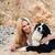 beyaz · köpek · plaj · sevimli - stok fotoğraf © deandrobot