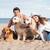 para · psów · wakacje · dwa · psa · posiedzenia - zdjęcia stock © deandrobot