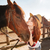 cute woman cowgirl standing and kissing her horse stock photo © deandrobot