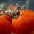 brilhante · suculento · fresco · ramo · vermelho · groselha - foto stock © deandrobot