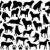 raccolta · diverso · cani · isolato · bianco · husky - foto d'archivio © dece