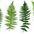 illustration of different ferns stock photo © dece