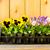 planting garden stock photo © dehooks