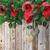 día · de · san · valentín · rosas · rojas · chocolate · tarjeta · de · felicitación · corazón · cuadro - foto stock © denisgo