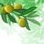 oliveira · Israel · férias · árvore · comida · campo - foto stock © denisgo