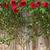 バレンタインデー · 赤いバラ · チョコレート · グリーティングカード · 中心 · ボックス - ストックフォト © denisgo