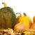 ripe pumpkins stock photo © denisnata