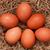 vers · boerderij · eieren · hooi · tabel · Blauw - stockfoto © denisnata