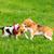 kettő · kutyák · játszik · park · vegyes · fajta - stock fotó © denisnata