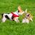 небольшая · группа · собаки · изолированный · белый - Сток-фото © denisnata