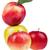 vers · appel · rijp · Rood · Geel · appels - stockfoto © DenisNata