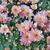 espanhol · flores · foto · tarde · verão · tempo - foto stock © dermot68