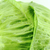 taze · yeşil · lahana · beyaz · çalışmak · yol - stok fotoğraf © designsstock