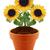 girassol · plântula · semente · isolado · branco · cópia · espaço - foto stock © designsstock