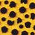 yellow sunflower stock photo © designsstock