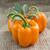 waterdruppels · oranje · groene · bladeren · geïsoleerd · druppels - stockfoto © designsstock