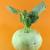 yalıtılmış · lahana · beyaz - stok fotoğraf © designsstock