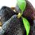 белый · авокадо · плодов · фрукты · зеленый · тропические - Сток-фото © designsstock