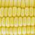 ucha · kukurydza · odizolowany · biały · warzyw · ziarna - zdjęcia stock © designsstock