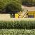 kukorica · zöld · tájkép · nyár · búza · ősz - stock fotó © deyangeorgiev